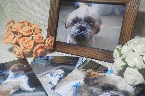 イヌの写真