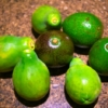 アボカドのフェルテ種